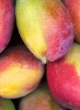 MANGO CHUTNEY (Chutney mangue)