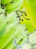 BANANA WITH AGRICOLE RUM (Banane au rhum agricole)
