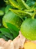 LIME / GINGER (Citron vert / Gingembre)